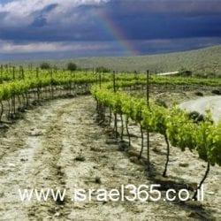 http://www.israel365.co.il