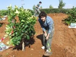 Teens planting trees in Israel