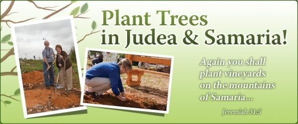 Plant a tree banner.