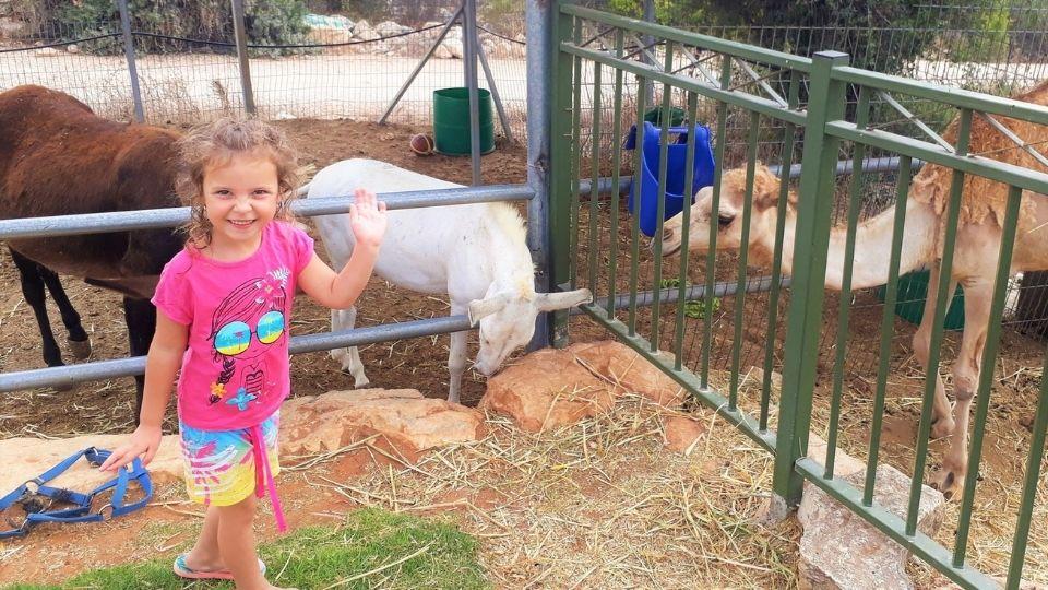 960x540 Revava Petting Zoo